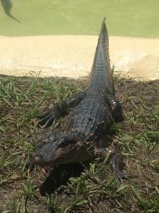 Fun Spot-Gator Spot 017