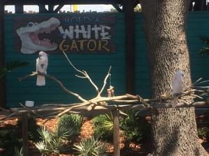 Fun Spot-Gator Spot 027