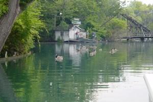 Canadian Geese on the Cedar Point Lagoons