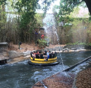 Busch Gardens and Fun Spot America 182