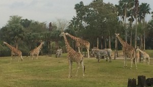 Busch Gardens Tampa 122
