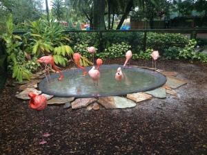 Busch Gardens Tampa 182